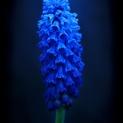 Macro Flower 6