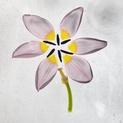 Deconstructed Tulip