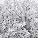 Snow Days #7