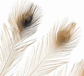 Feathers #1