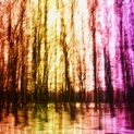Rainbow Forest