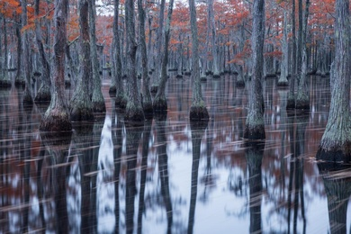 Autumn in the Bayou