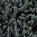 Winter Leaves #1