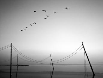 Birds Over Bombay Study 2