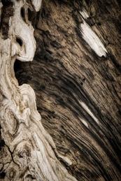 Driftwood-2
