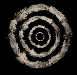 Concentric Feathers