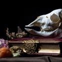 Alpaca Skull