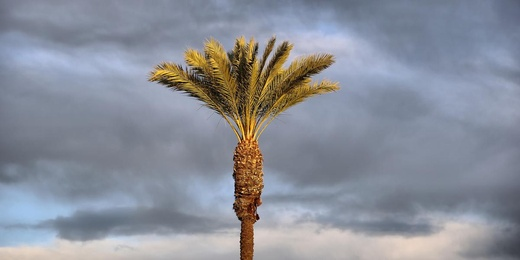 Early Morning Palm
