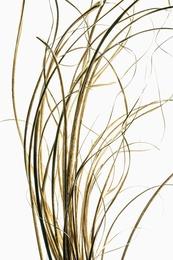 Sea Grasses
