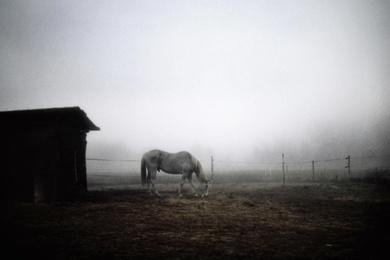 Polaroid Horse