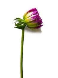 Macro Flower 12