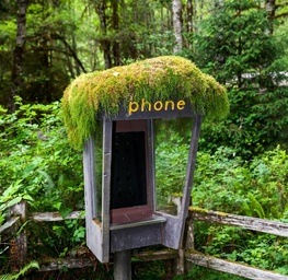 Forest Phone - II