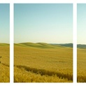 Farm Road Triptych