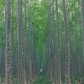 Tree Farm XXII