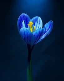 Macro Flower 4