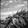Raffia-Style Parasol 2