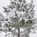 Snow Days #5