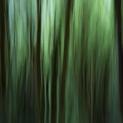 Alder Forest Abstract V