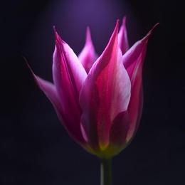 Macro Flower 7