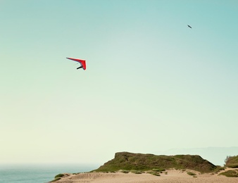 Red Glider + Seagull