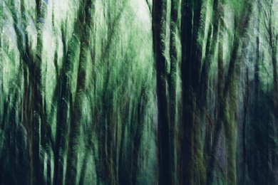 Alder Forest Abstract IV