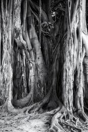 The Great Tree V