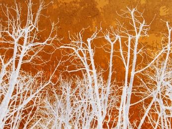 Kork Trees