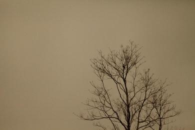 Mist and Bird 4