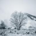 Winter Walk 05