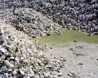 Oysterscape #3
