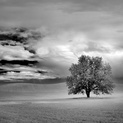 Lone Pasture Tree