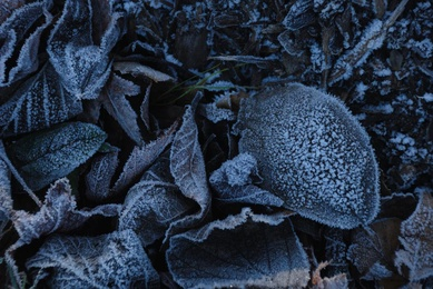 Winter Leaves #7