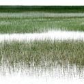 Coastal Marsh II
