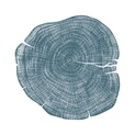 Stump 1 - Variation 5