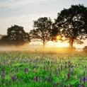 Meadow Sunrise