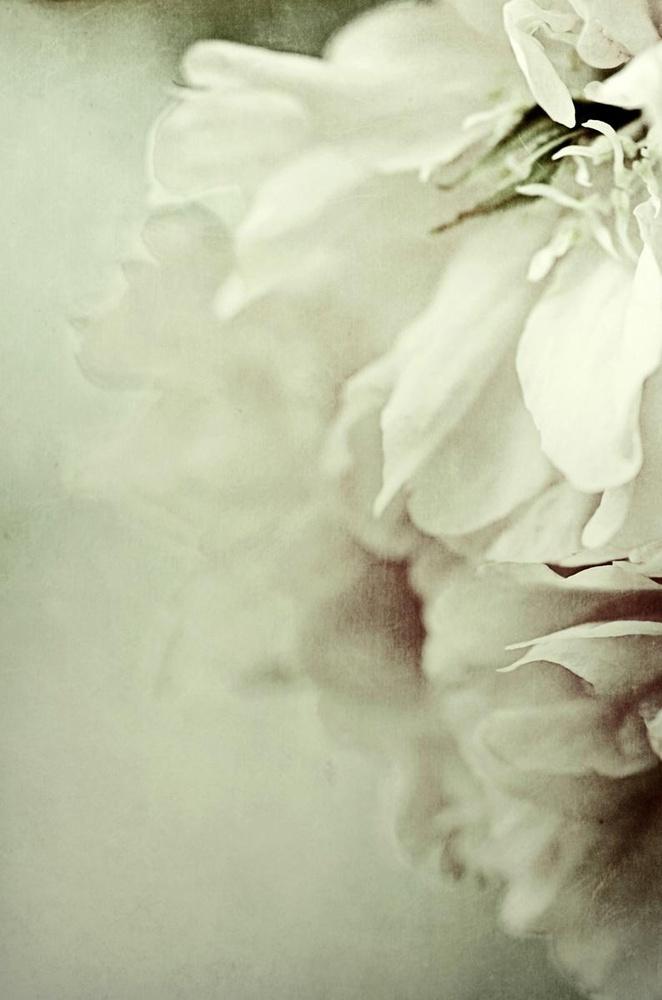 St Johns Flowers