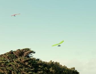 Tree Gliders