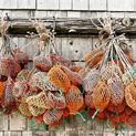 Bait Bags Hang From a Dockside Shed, Maine
