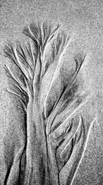 Sandy Tree
