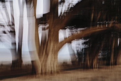 Cypress Grove Abstract I