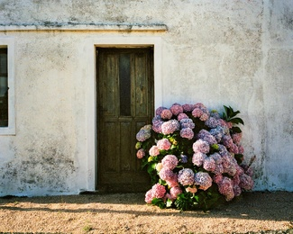 Garzon Door #4