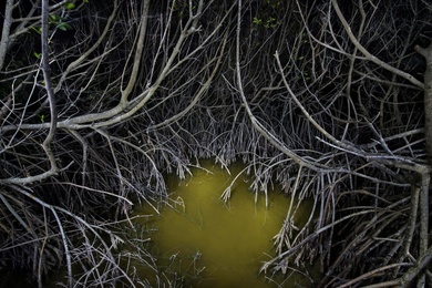 Maze in the Mangroves