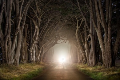 Cypress Tree Tunnel 2