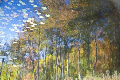 Reflection 30