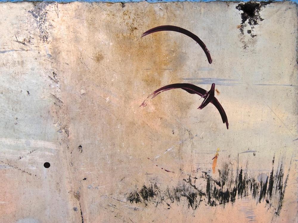 Bird Shapes