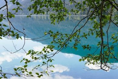 Spring Alder on Lake Crescent