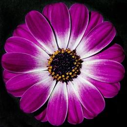 Macro Flower 24