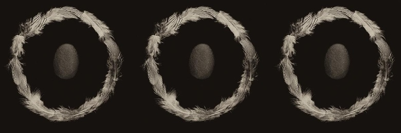 Ring of Feathers II