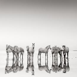 Lowry Horses