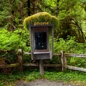 Forest Phone - IV